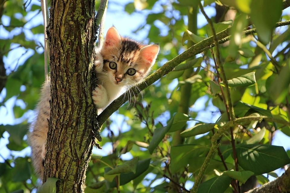 cat-1647775_960_720