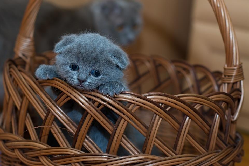 adorable-1845789_960_720