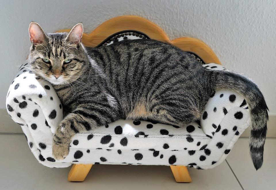 cat-2525277_960_720