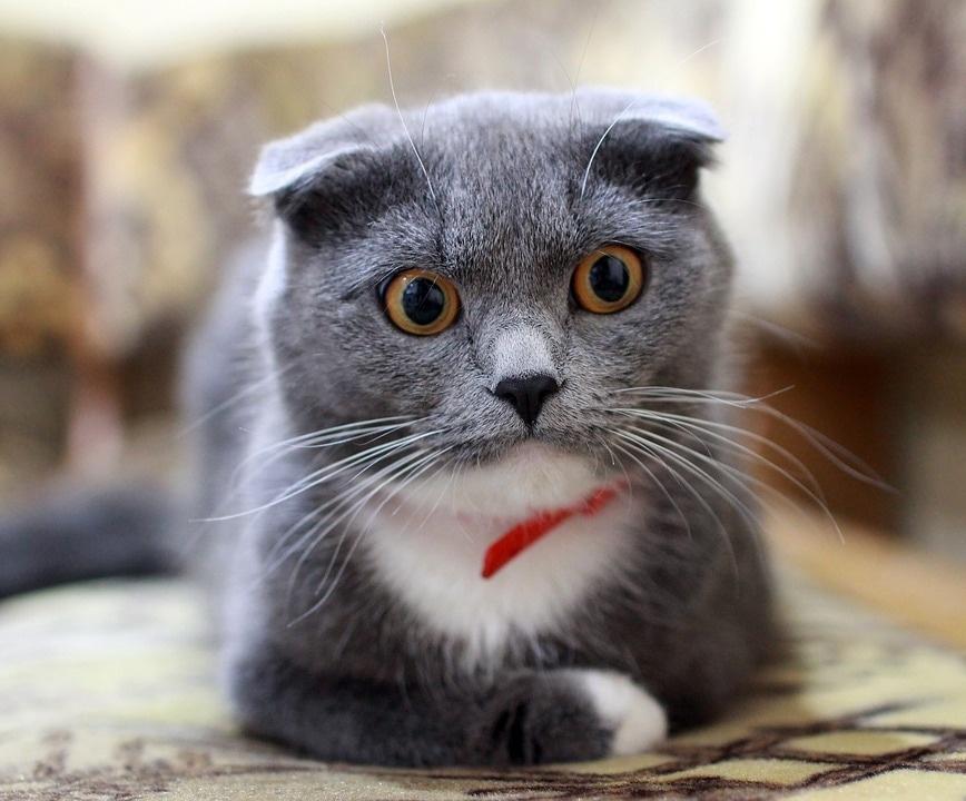 cat-2762156_960_720