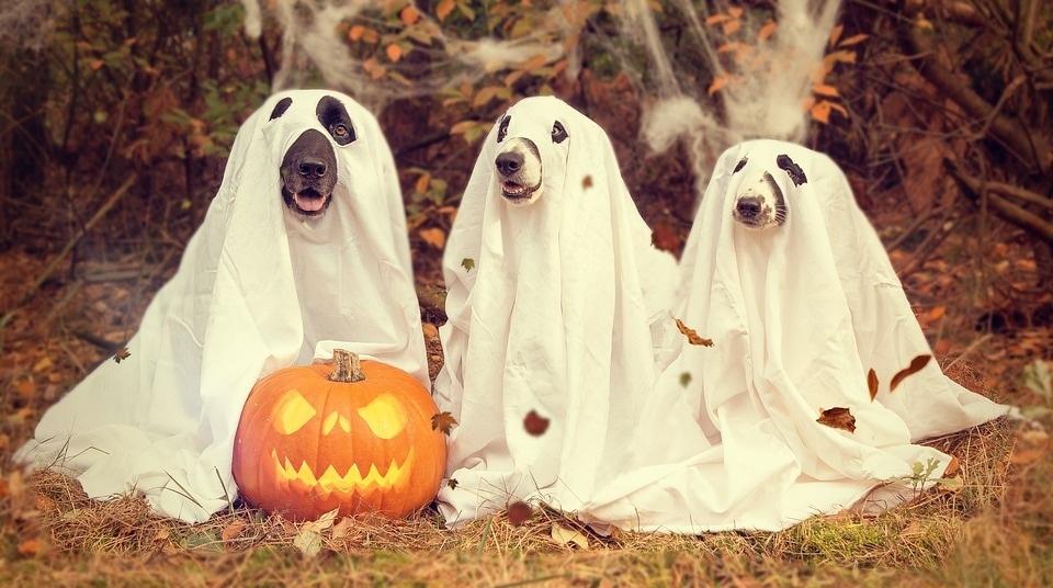 halloween-2870607_960_720