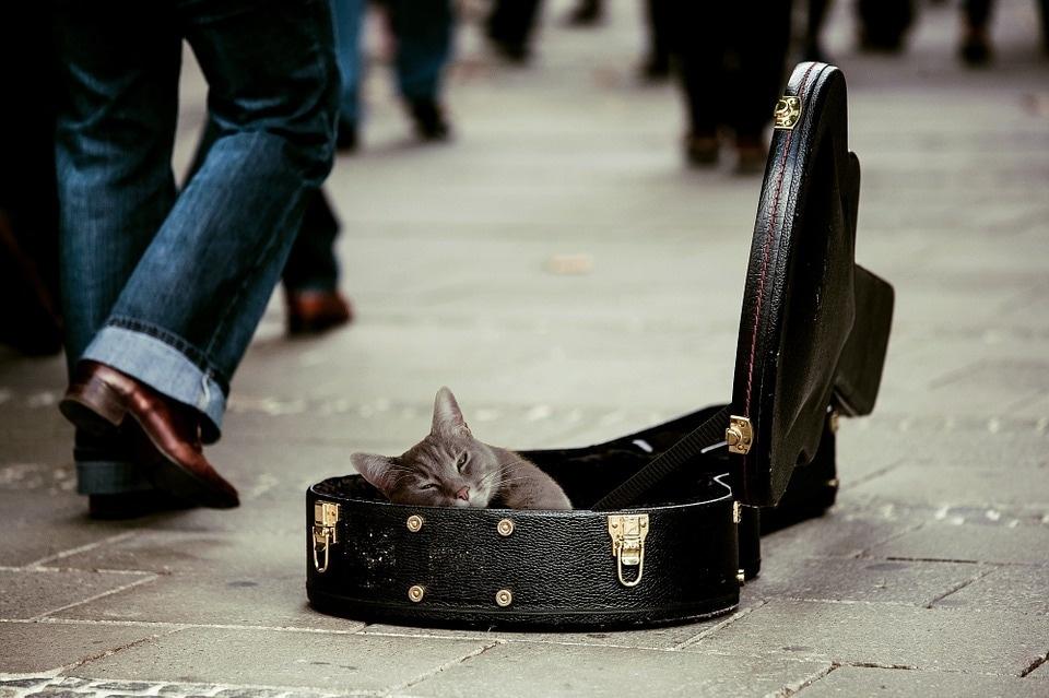 kitty-491013_960_720