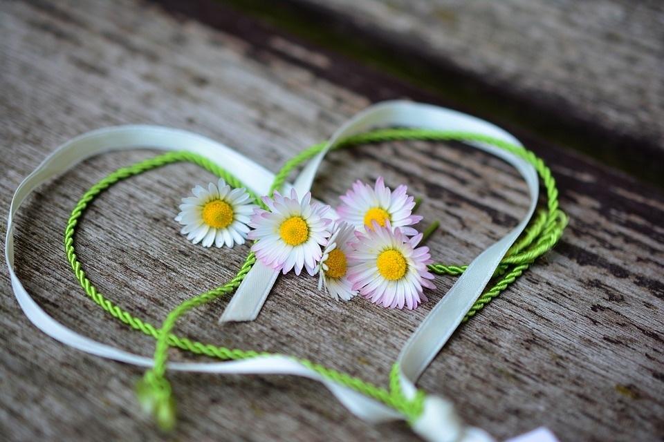 daisy-3392654_960_720